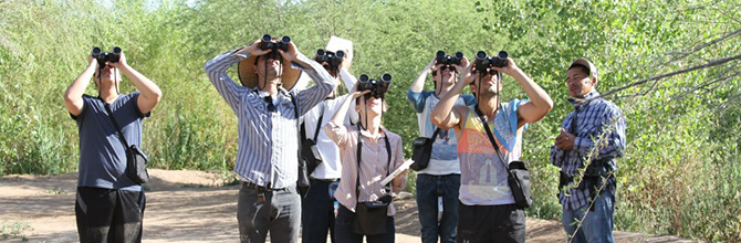bird watching, colorado river delta, cienega de santa clara, birding