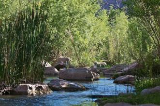 Lush riparian habitat on the Verde River